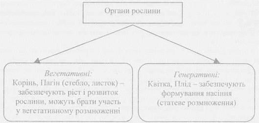 орган растений.