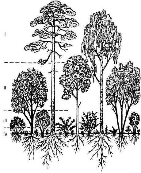 расположение леса (схема)