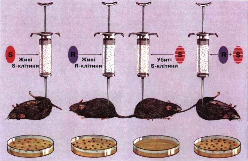 помощью ДНК клетки-донора.